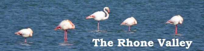 Flamingo Banner