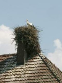 Stork's nest en route